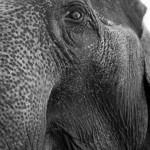 Camp des éléphant près de Chiang Mai